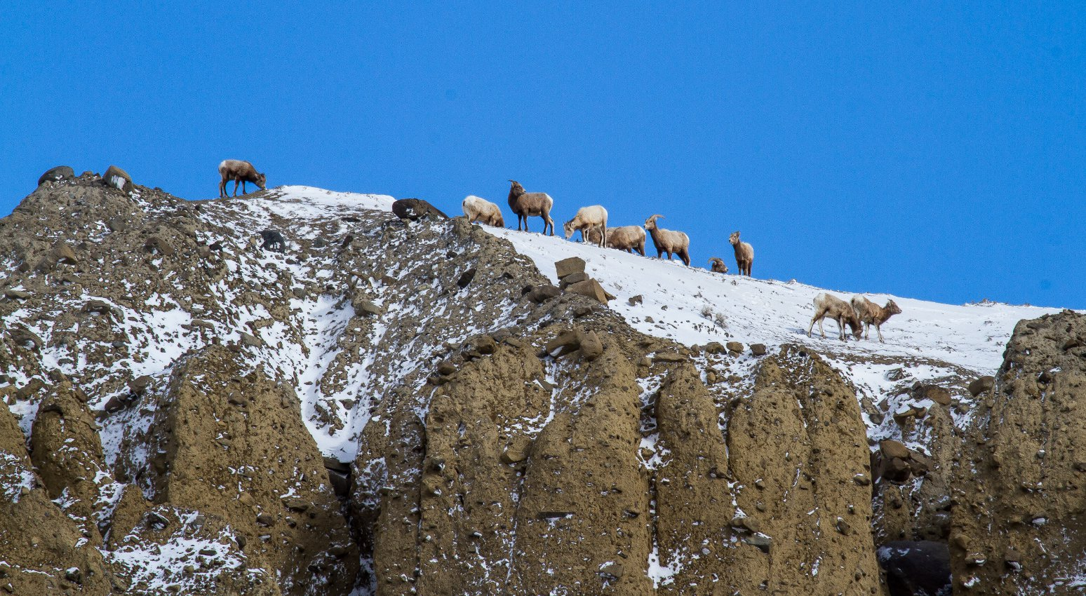 Yellowstone-Pics-By-Duane-Huie
